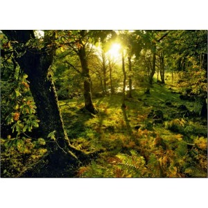 Puzzle 1000 Magic Forests Glade