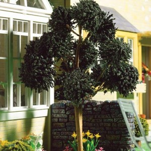 Arbol Ornamental